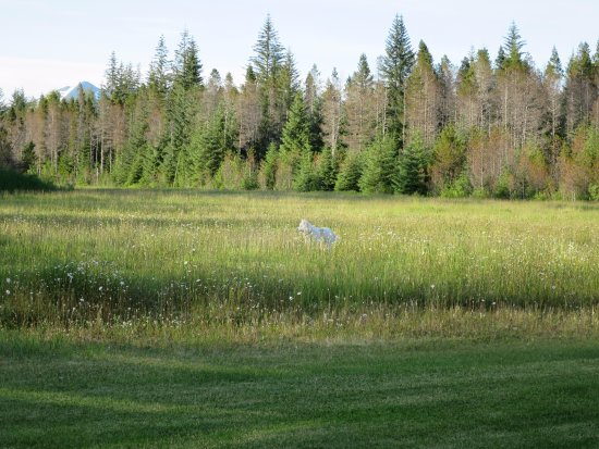 Gustavus, AK: View from dining room of landing strip field and owners dog