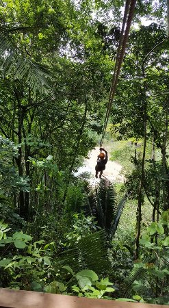 Challenge Travel and Tours: Gerold of the Jungle ~