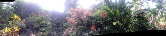 Hunte's Gardens: photo3.jpg
