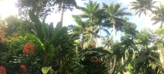 Hunte's Gardens: photo4.jpg