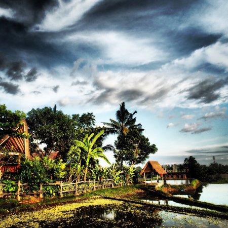 Omah Apik: photo4.jpg