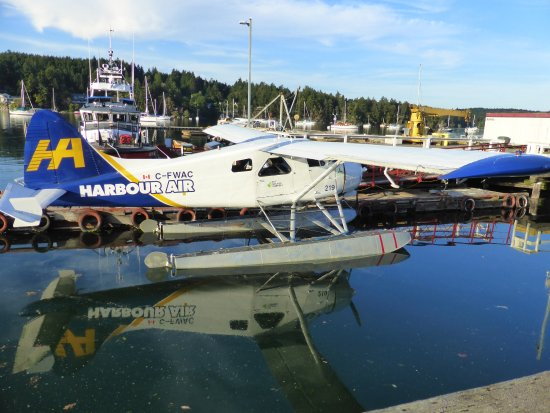 Oystercatcher Seafood Bar & Grill: Fascinated by the floatplanes at the harbour.