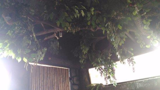 Pai Vista: Jungle