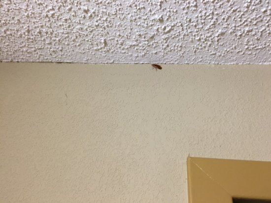 Dickson, TN: The roach on the wall.