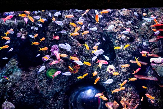 Different Type Of Small Fish Picture Of Istanbul Sea Life Aquarium