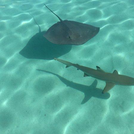 Moorea, Polinesia Francesa: photo0.jpg