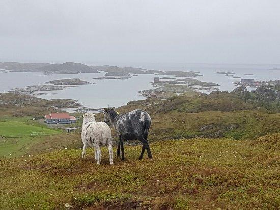Lovund, Noruega: 20160619_142943_large.jpg