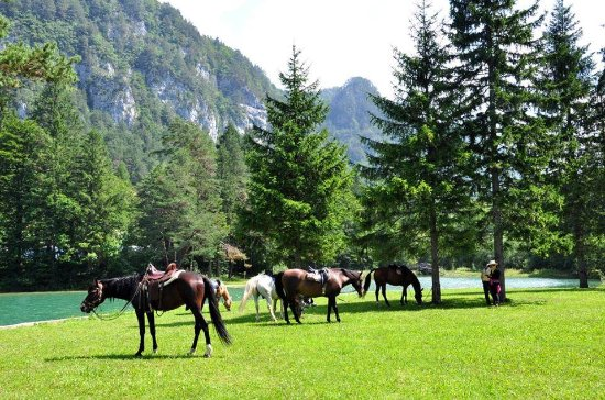 Lesce, Slovenia: Trail riding break