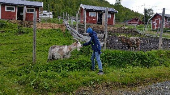 Tromsø Mini Zoo