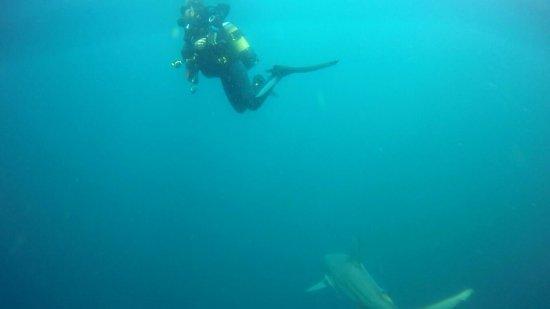 Protea Shark Divers: B7AF15A5027C3C9B1168234FB6C77138_large.jpg