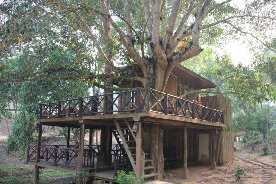 DreamCaught Treehouses