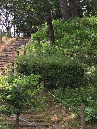 Kibo no Oka Park