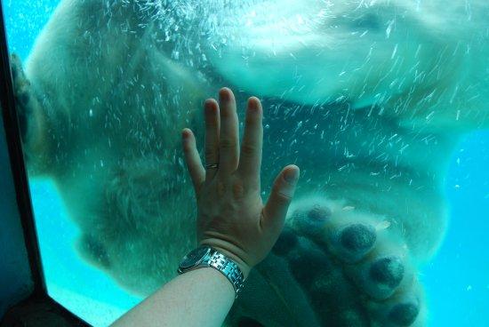 North Carolina Zoo: Nikita's Paws!