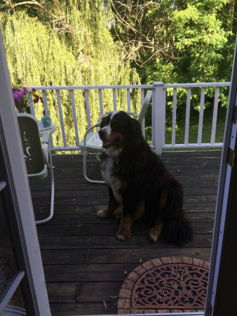 Sharp Rock Vineyard Bed and Breakfast Cottages: Doc, our breakfast companion