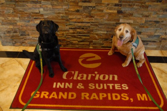 Clarion Inn & Suites Airport: HOPE Animal Assisted Crisis Response dogs Ischgl and Katie Lynn at the Clarion