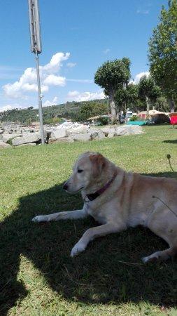 Foto de Camping La Spiaggia