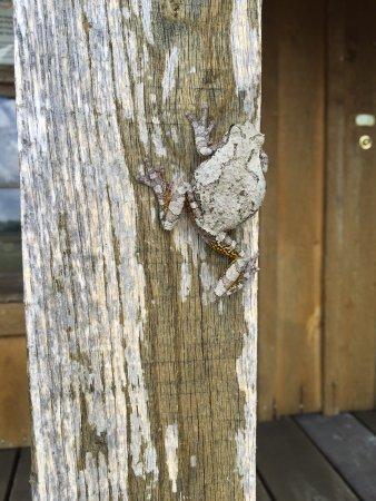 Moulton, AL: photo1.jpg