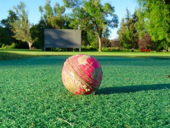Riley Park : Cricket anyone?