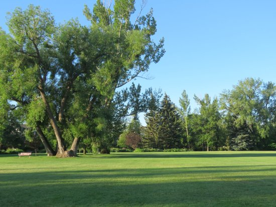 Riley Park : Ancient trees