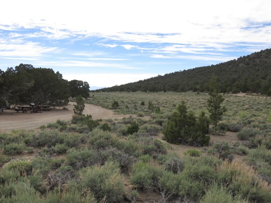 Inyo National Forest : the lower loop of the campground goes around a meadow of sage and pinion pines