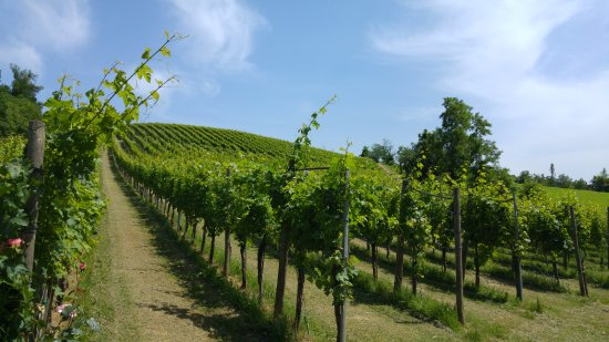 Emilian Land Tour : local vineyard