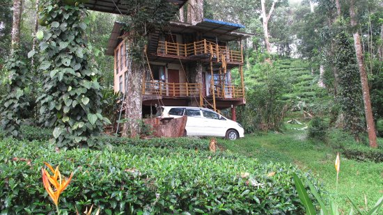 Jungle Jive Treehouse View From Outside Picture Of