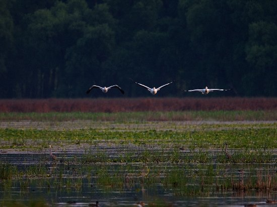 Bloomington, MN: The Minnesota Valley National Wildlife Refuge stretches nearly 70 miles along the Minnesota Rive