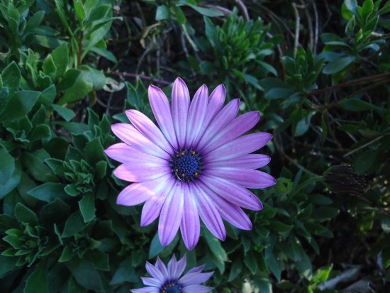 Flores Lindas Picture Of Amantikir Park Campos Do Jordao
