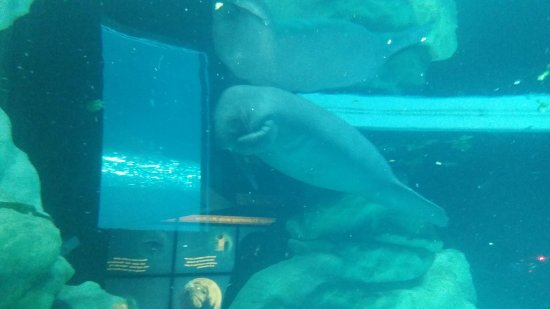 The Epcot Seas Aqua Tour: Manatee at The Seas with Nemo & Friends