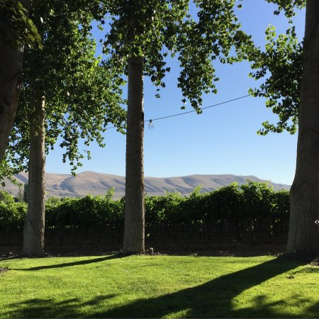Benton City, Etat de Washington : Cooper Estate Vineyard view from the winery back tasting patio.