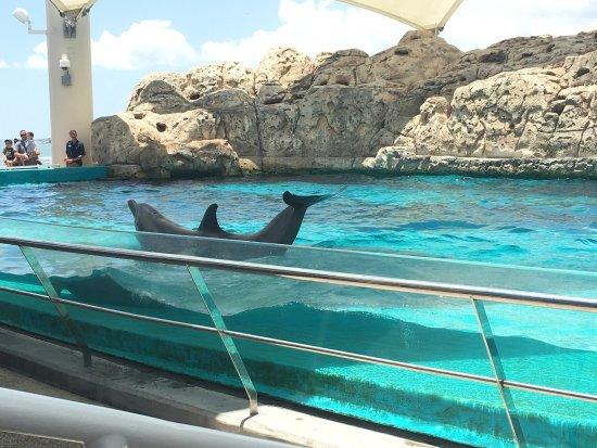 photo1.jpg - Picture of Texas State Aquarium, Corpus ...