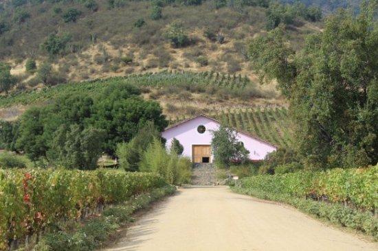 Lolol, Cile: Nuestra Bodega y Viñedos Orgánicos