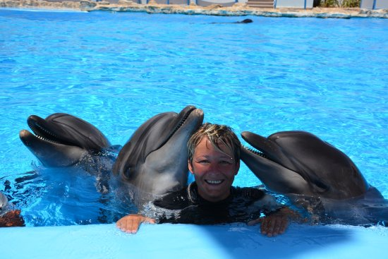 Dolphin World | Dolphin World Hurghada Picture Of Dolphin World Hurghada