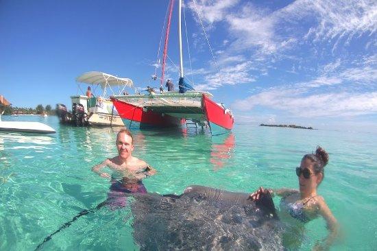 Moorea, Polinesia Francesa: More sting ray action!