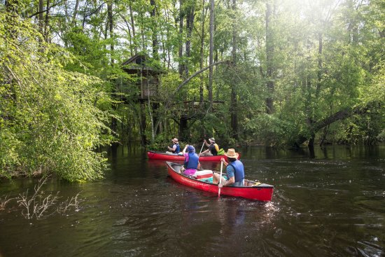 South Carolina: Kayaking through the Edisto Tree Houses