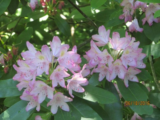 Cross Estate Gardens: Pretty pink bunches