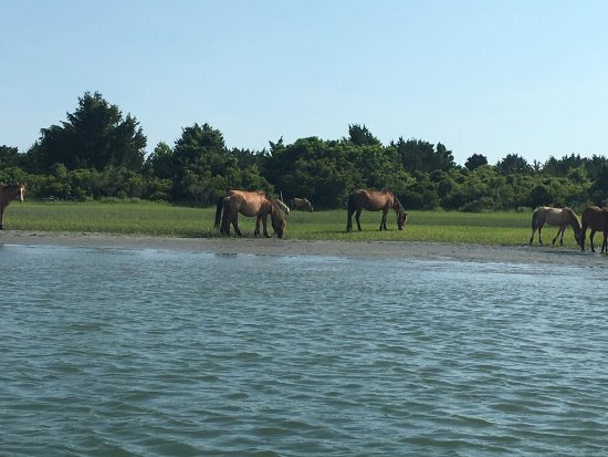 Beaufort, NC: Island Ferry Adventures