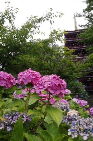 Hondo-ji Temple: photo6.jpg