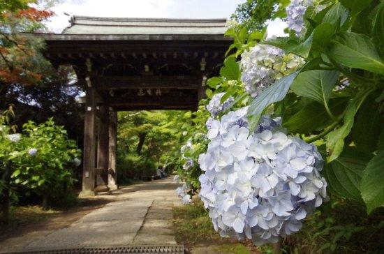 Hondo-ji Temple: photo7.jpg