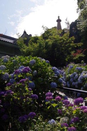 Hondo-ji Temple: photo9.jpg