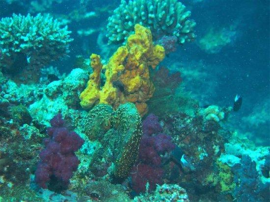 Taveuni Dive: FB_IMG_1466646617137_large.jpg