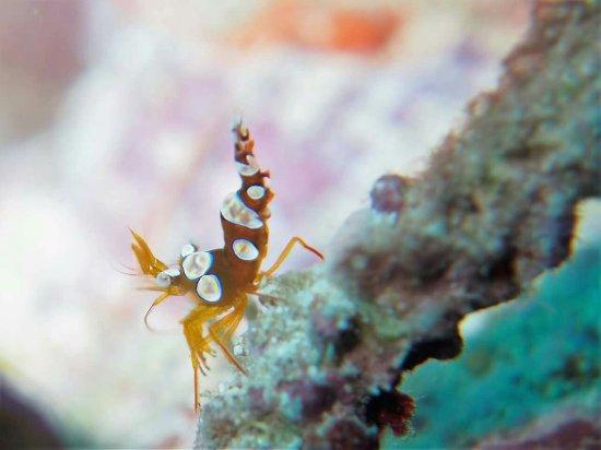 Taveuni Dive: FB_IMG_1466646606265_large.jpg