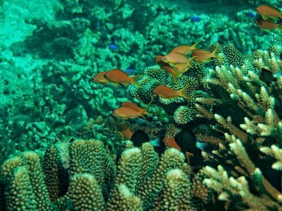 Taveuni Dive: FB_IMG_1466646595328_large.jpg