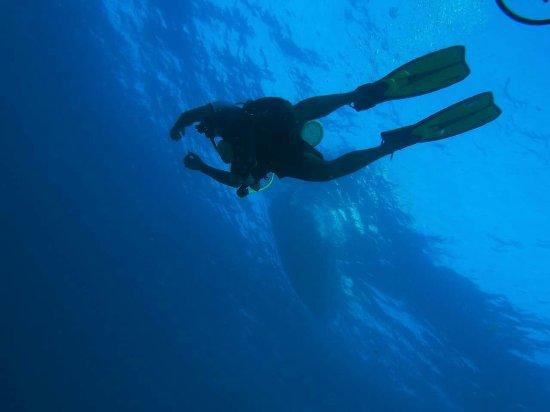 Taveuni Dive: FB_IMG_1466646581610_large.jpg