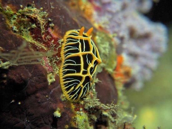 Taveuni Dive: FB_IMG_1466646569567_large.jpg