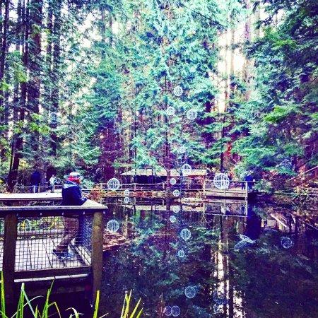 North Vancouver, Kanada: IMG_20151208_133656_large.jpg
