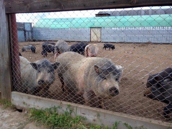 Perm Krai, Russland: Выпрашивают морковку