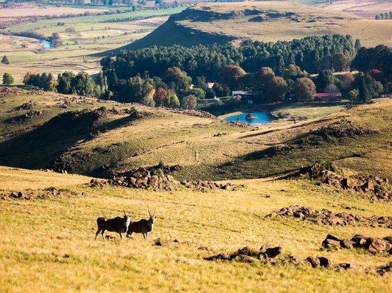 Khotso Adventure Farm