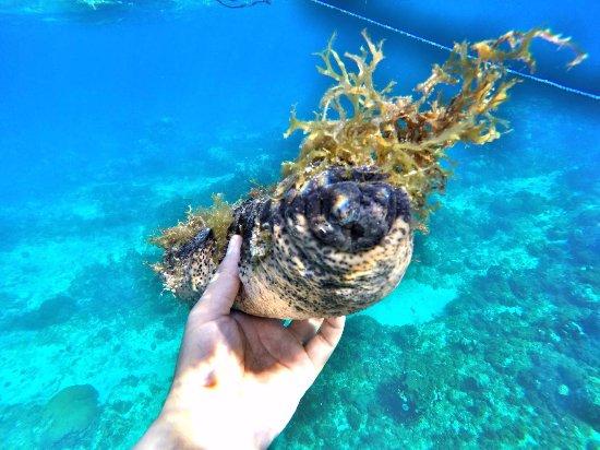 Hermosa Cove, Villa Resort & Suites: Sea cucumber
