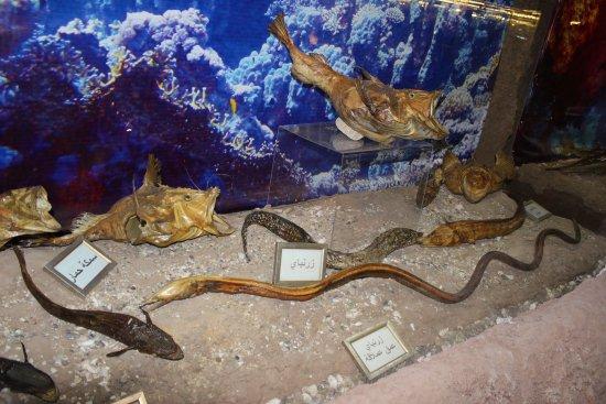 Lebanese Marine and Wildlife Museum